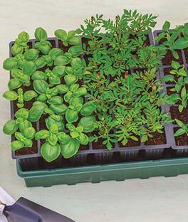 Ultimate Growing System, , large
